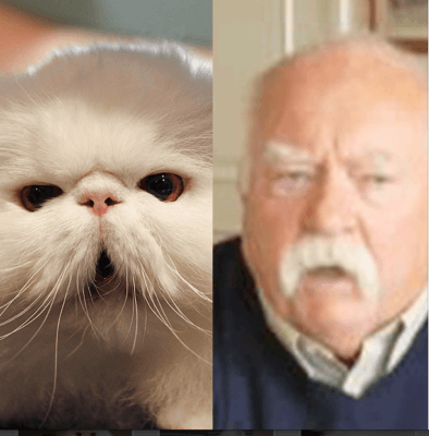 Brimley Comparison