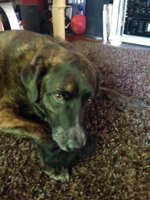 Sammy, The Hosty Dog