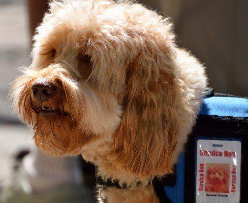 Should I get a diabetes service dog?